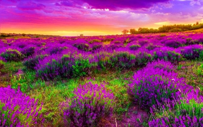 Beautiful Sky And Spring Landscape Spring Landscape Beautiful Landscapes Spring Wallpaper
