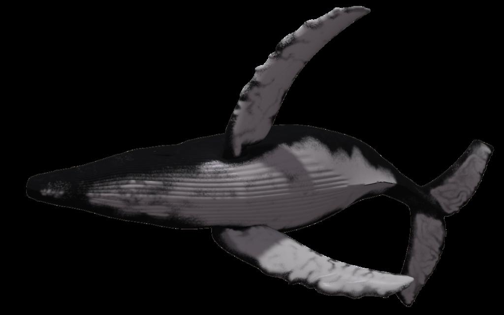 Humpback Whale 05 Livros Desenho Desenho Desenhos
