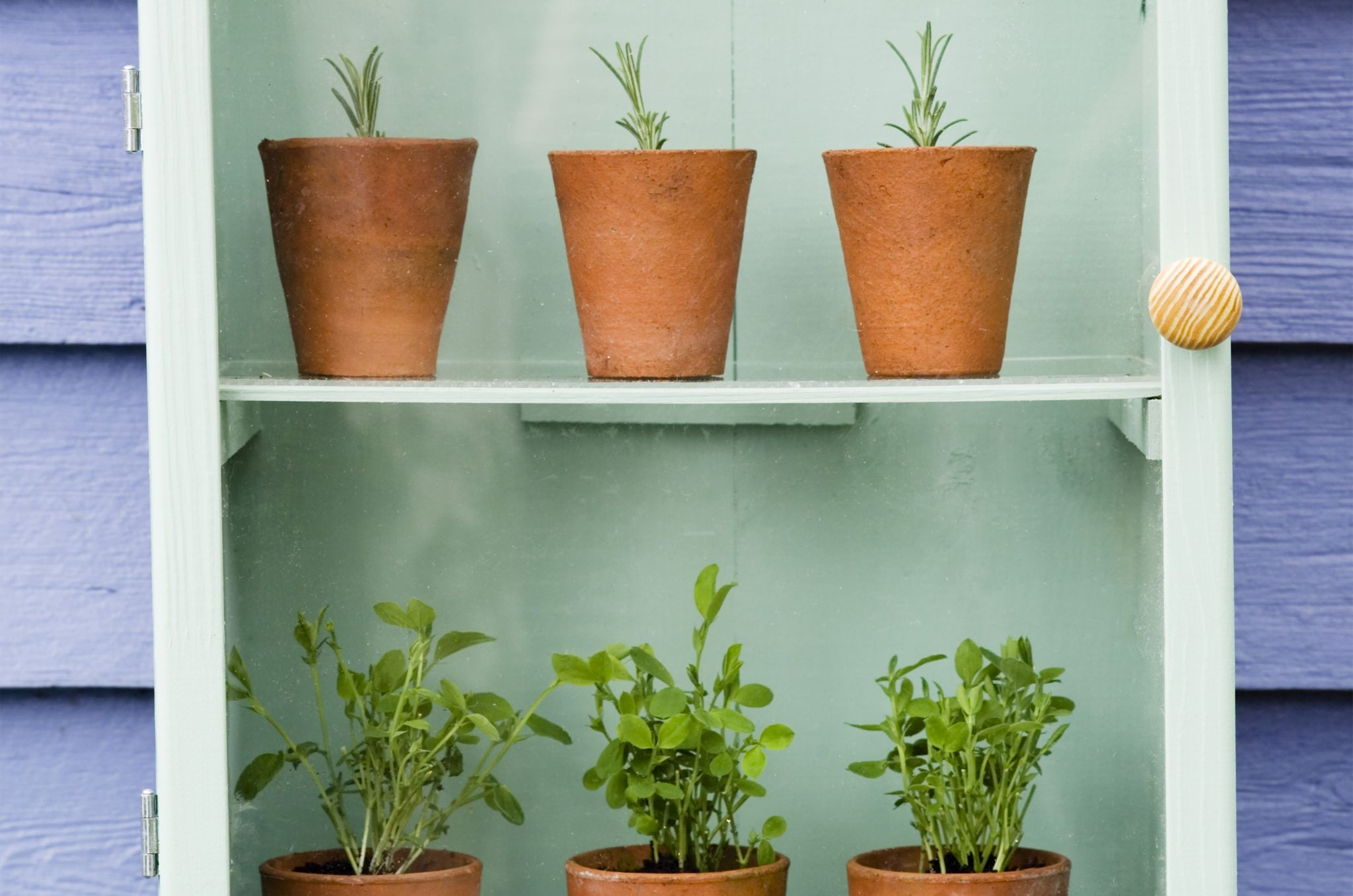 Discover how to create a mini-greenhouse to protect cuttings and seedlings, with the help of our easy practical guide, from BBC Gardeners' World Magazine.