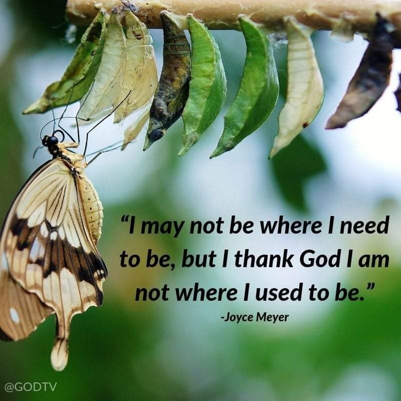 Pin by Patti Floyd on Butterfly Quotes   Natural child ...