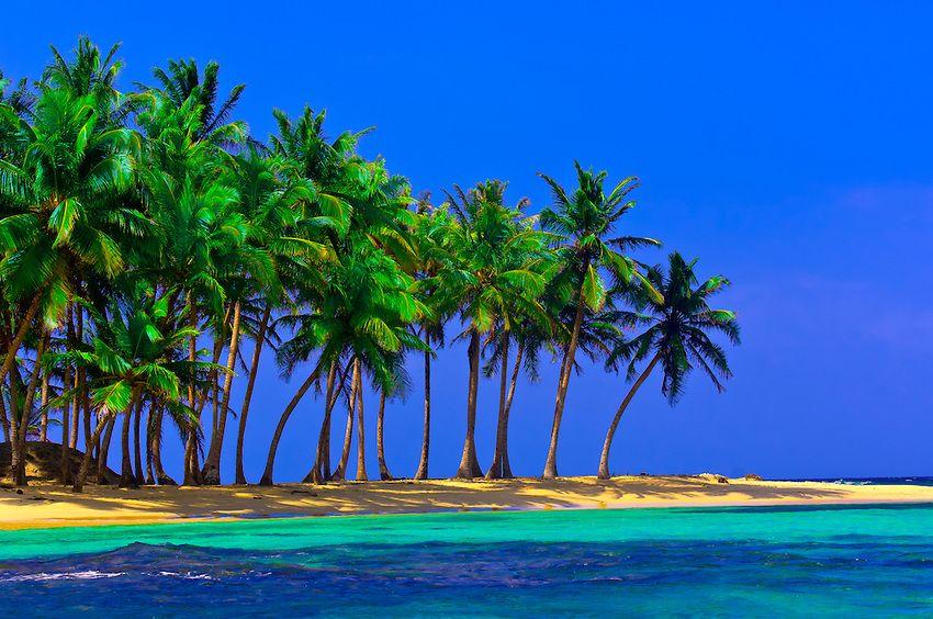 Palm trees on Pelican Island (a.k.a. Icotupo Island), San Blas Islands (Kuna Yala), Caribbean Sea, Panama ✯ ωнιмѕу ѕαη∂у