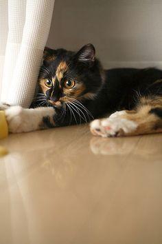 Don Ts Frow It Away Bubblewrap Be Reason Fer Poppin Cats Cute Cats Photos Kittens