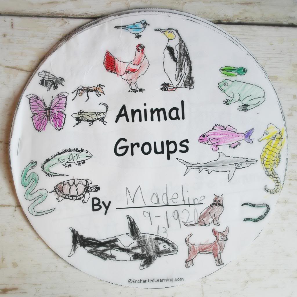 Pin Od Ania Na Animals Teaching Zoology
