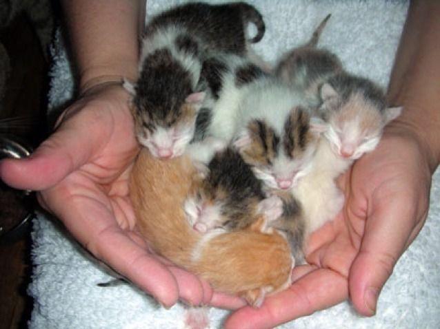Kijiji Free Kittens Kittens Cutest Newborn Kittens Cute Cats