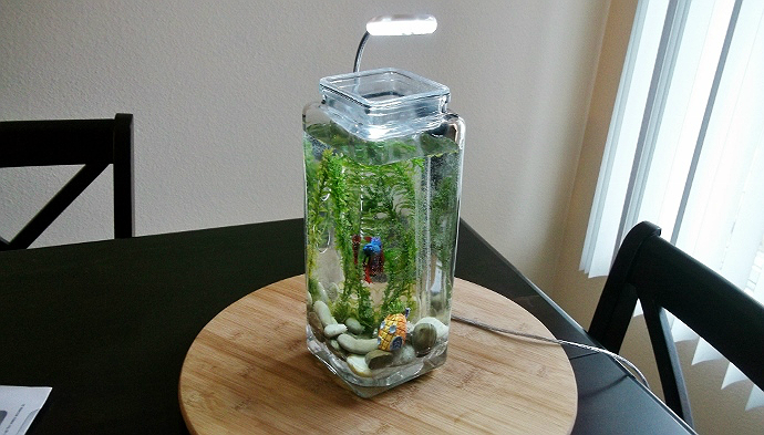 Creative beta tanks betta fish tanks ideas for the for Betta fish natural environment
