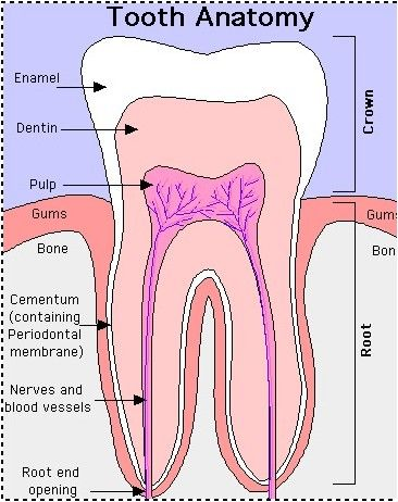 How to Improve Teeth Health Naturally - Dental Care Tips #dentalassistant