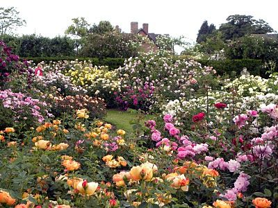 Squires Niednagel I Want To Stroll This Garden Breathe In The Ambrosial Air With My Fellow English Rose Lover