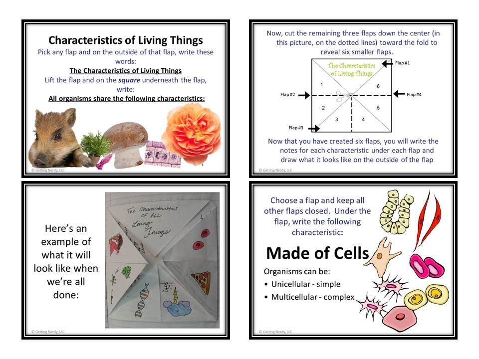 What are all living things made of?