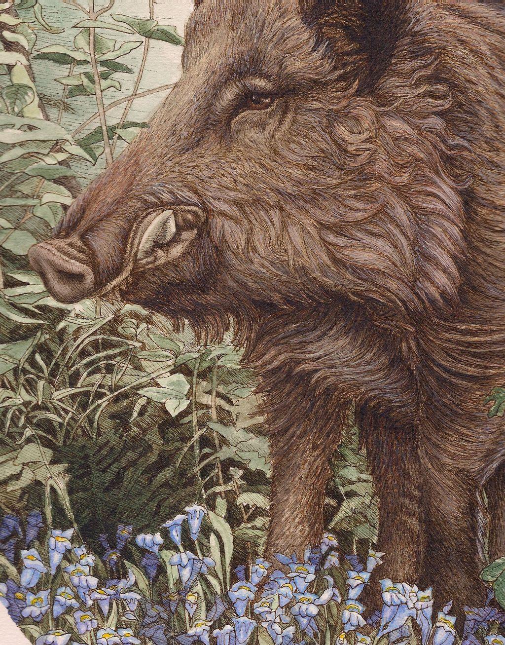Wild Boar Painting Wild boar with foliage | Undomesticated Animal ...