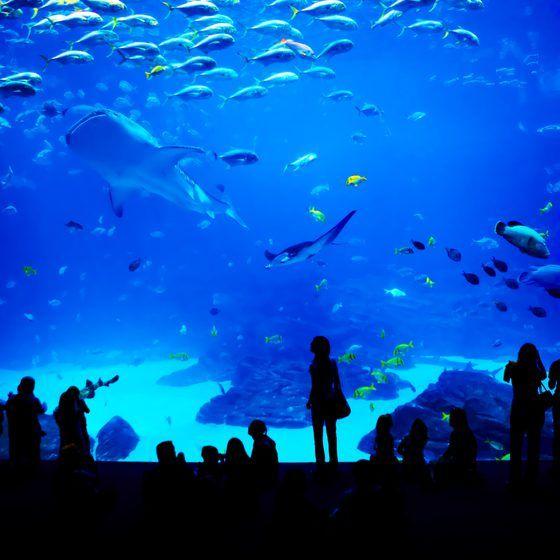 Top Five Aquariums In The U.S.