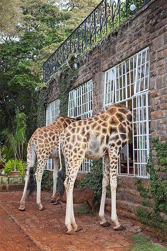 Kenya Baby Animals