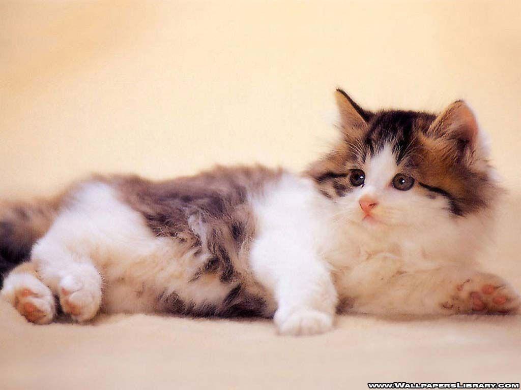 baby cat wallpaper katzen 2 pinterest katzen. Black Bedroom Furniture Sets. Home Design Ideas
