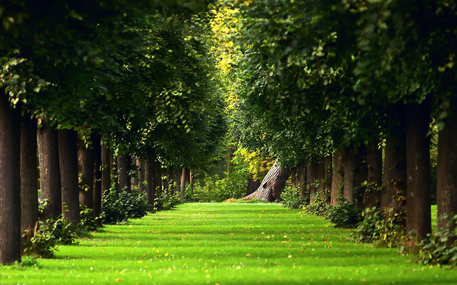 Foto Besplatno Alleya Park Starye Derevya Trava Leto Zelen