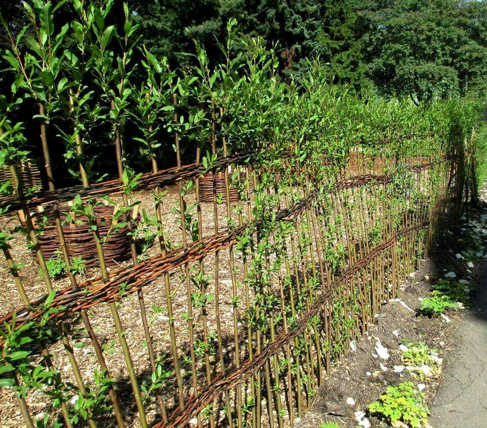 11 Fabulous Garden Fence Netting Ideas In 2020 Natural Fence