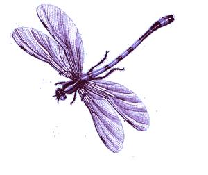 Pin De Joni Whitfield En Purple Libelulas Libelula Flores