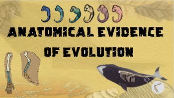 Anatomical Evidence Of Evolution Powerpoint And Notes Common