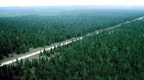 El Bosque de Uverito es un proyecto del ingeniero forestal y agrónomo José Joaquín Cabrera-Malo