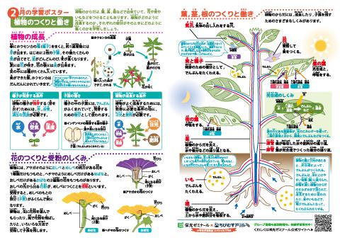 小学理科 植物のつくりと働き 学習ポスター クイズテスト 無料