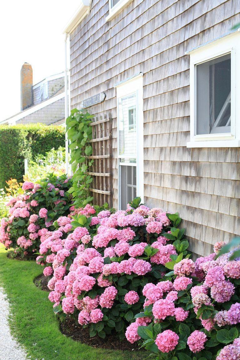 Beautiful Flower Beds In Front Of House Ideas In 2020 Front Yard Flowers Hydrangea Landscaping Hydrangea Garden