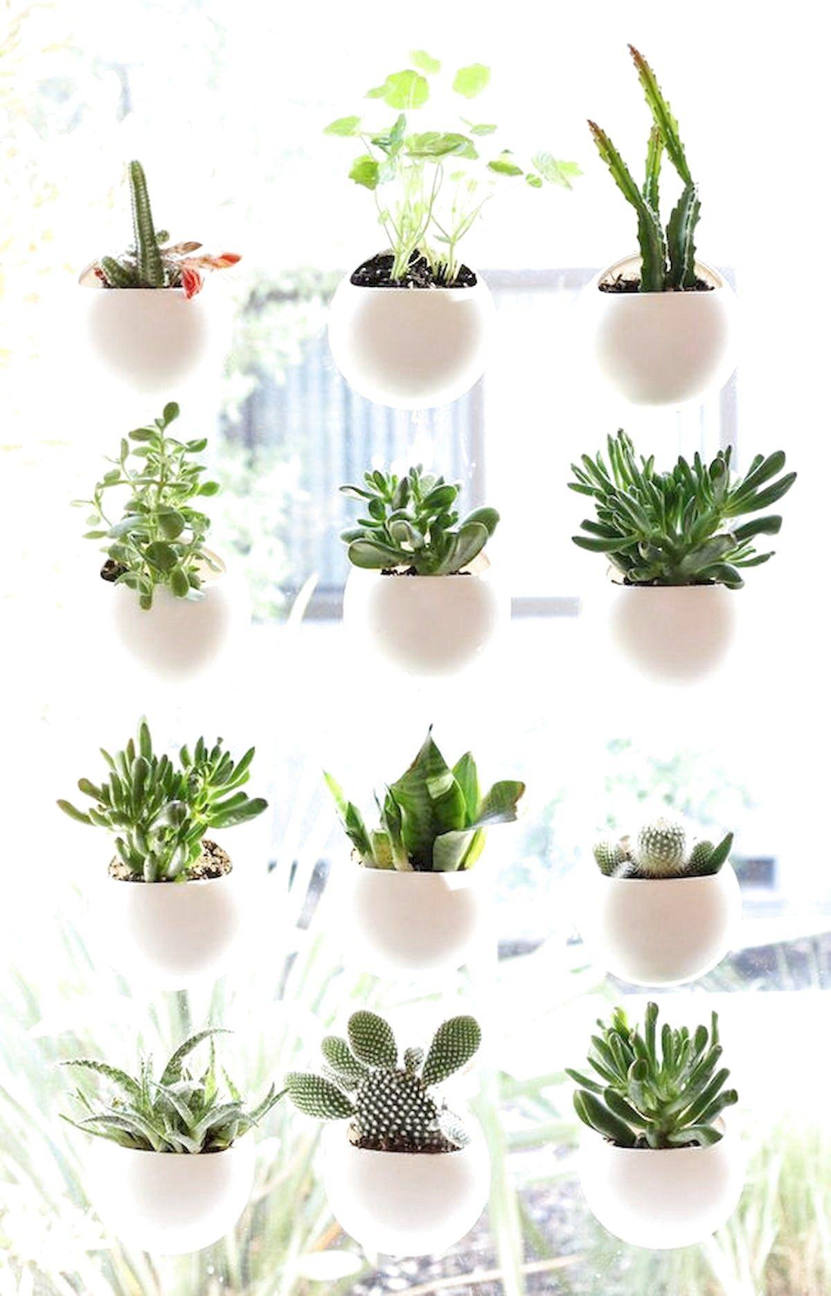 45 Best Indoor Garden For Apartment Design Ideas And ...
