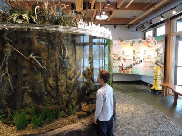 Knoch Knolls Nature Center - Naperville