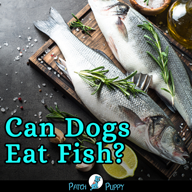 How To Cook Fish For Dogs 5 Simple Step By Step Fish Recipes For Dogs Fish Recipe For Dogs Fish Can Dogs Eat