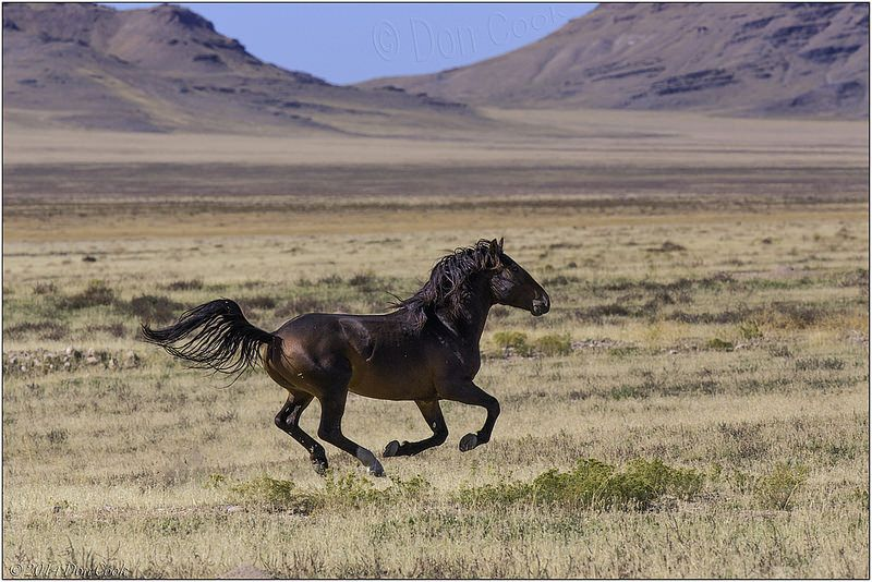 Wild Mustangs #utahusa