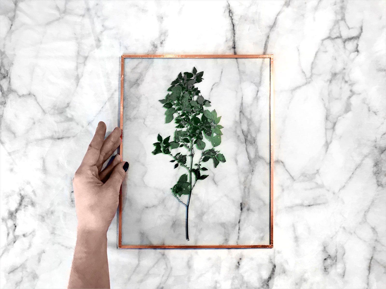 les 25 meilleures id es de la cat gorie plantes sous verre sur pinterest grand terrarium en. Black Bedroom Furniture Sets. Home Design Ideas
