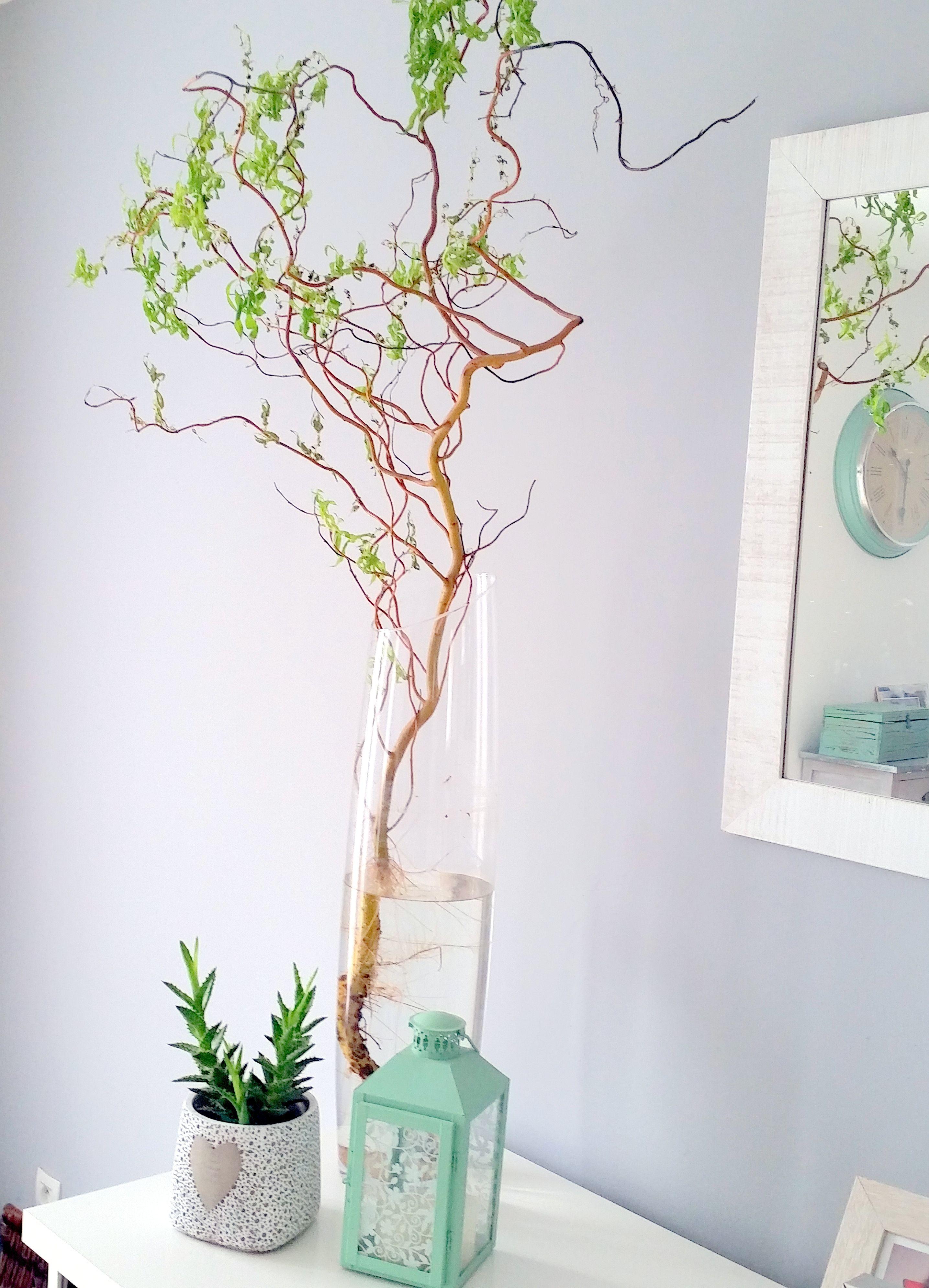 vase saule tortueux d 233 coration saule tortueux vase et plantes