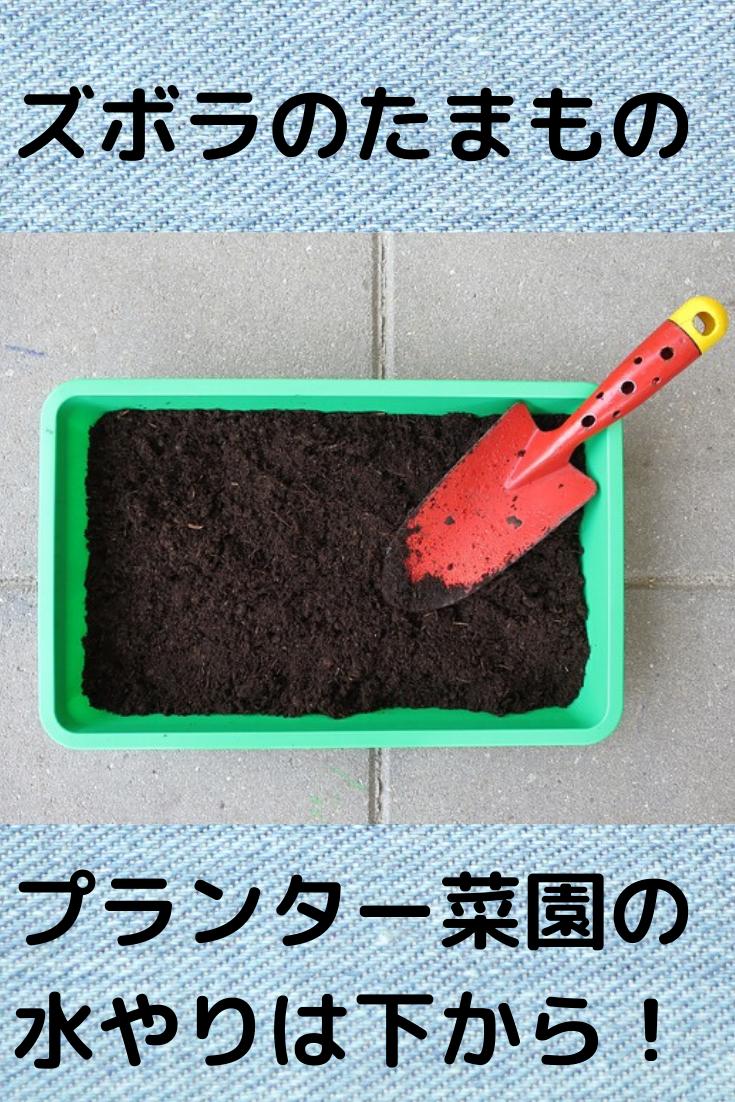 ズボラ家庭菜園 水やりを減らして野菜も元気になる方法 家庭菜園