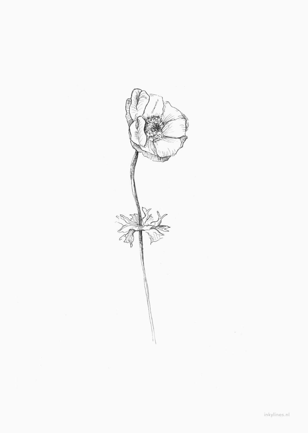 Printables Anemone Anemone Flower Flower Drawing Tiny Flower Tattoos