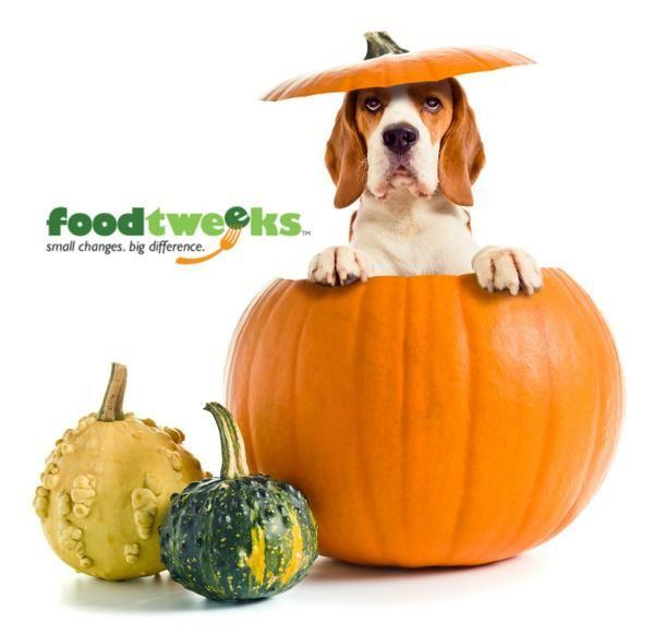 Foodtweeks On Community Do Gooders Can Dogs Eat Pumpkin