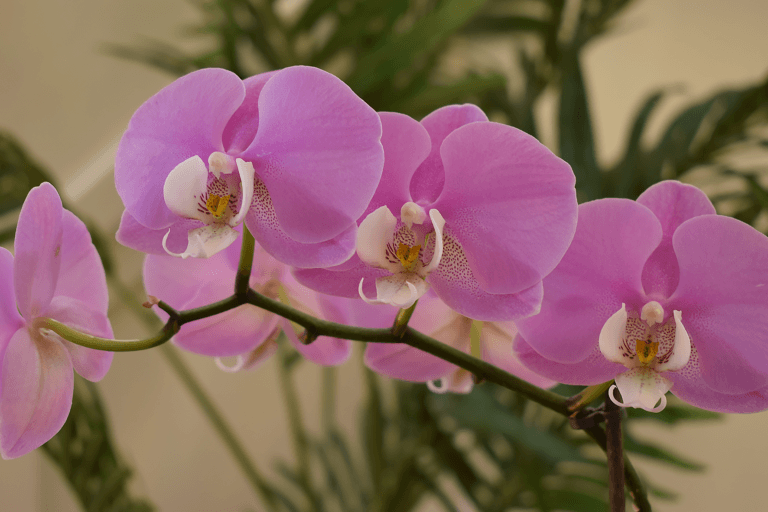 Photo of How to Rebloom and Care for Orchids – Caradise