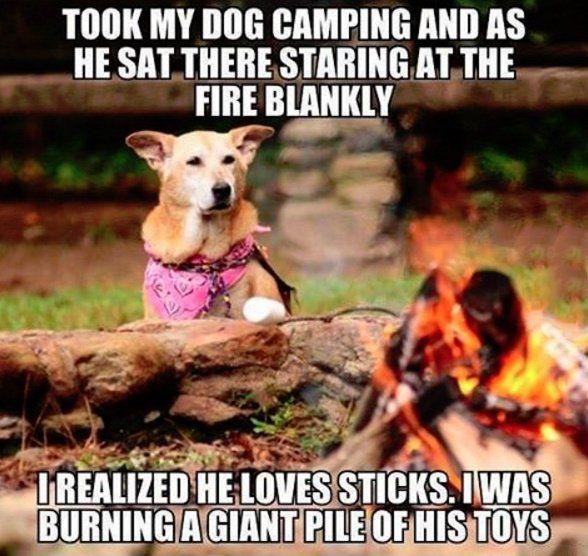 Never Thought About It Like That Hund Funnies Lustige Bilder Von Tieren Hund Witze