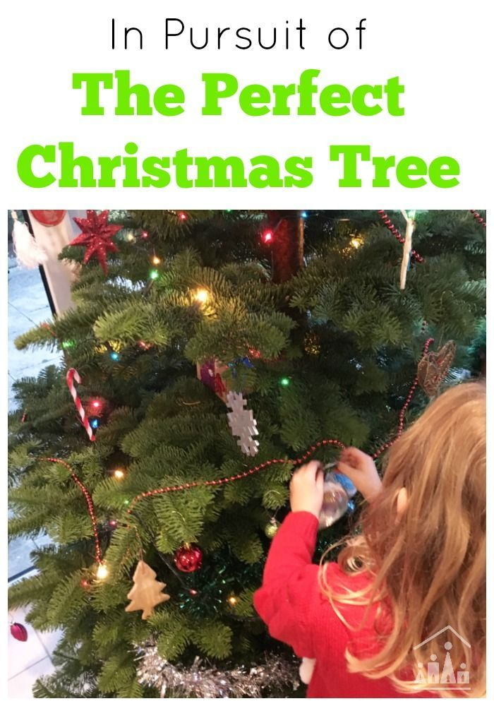 In Pursuit Of The Perfect Christmas Tree Real Christmas Tree Christmas Tree Farm Christmas Activities