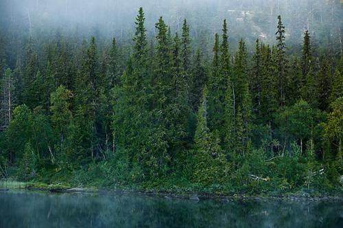 Bosques del mundo: Parque Nacional de Noruega