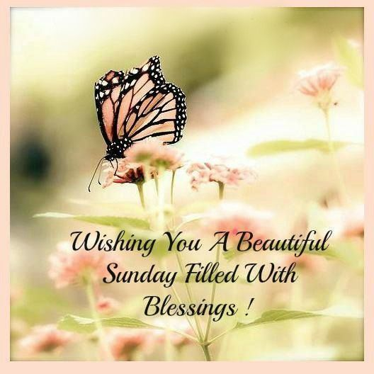 Wishing you a beautiful sunday pictures photos and images for wishing you a beautiful sunday pictures photos and images for facebook tumblr pinterest and twitter m4hsunfo