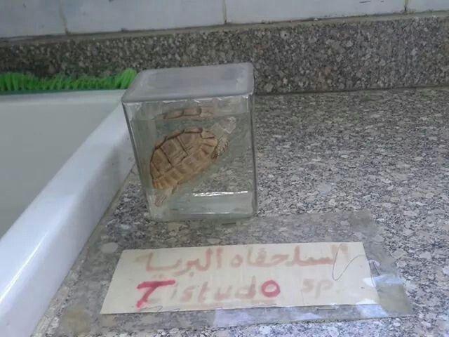 السلحفاه البرية Bathroom Scale Bathroom