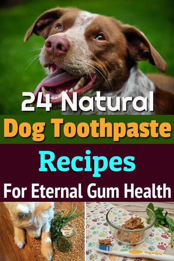 24 natürliche Zahnpastarezepte von DOG für einen gesunden und geruchsfreien Mund   – DIY