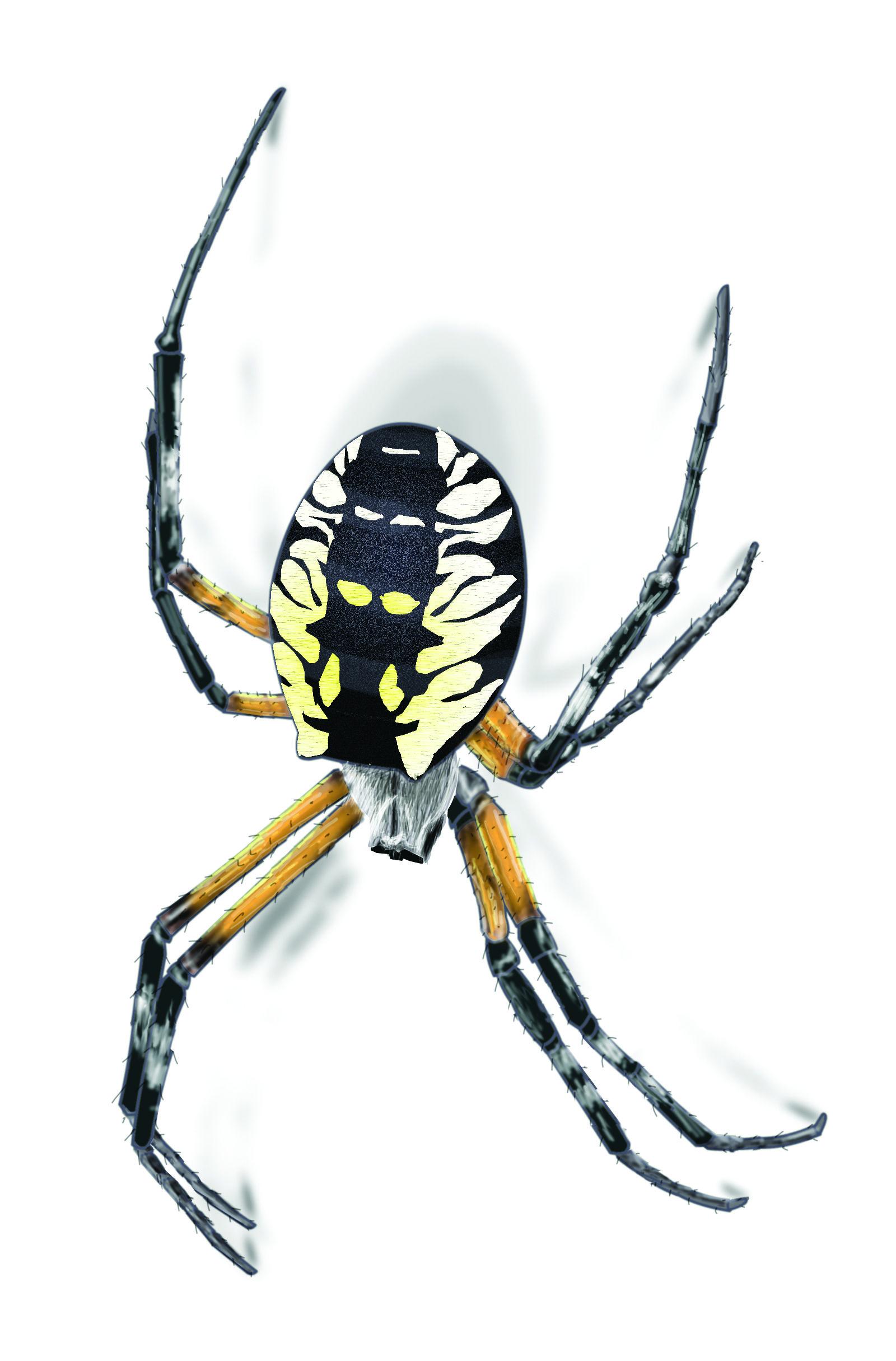 garden,spider,illustration_1600x2430