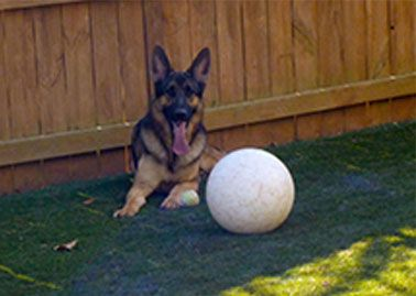 The Varsity Ball Large Dog Toys Big Dog Toys Indestructible Dog