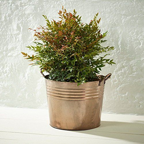 Burnished Copper XL Bucket Garden Planters GardenersDream ... on garden pools, garden shrubs, garden beds, garden art, garden seeders, garden pots, garden boxes, garden patios, garden vegetable garden, garden walls, garden ideas, garden plants, garden trellis, garden tools, garden arbors, garden bench, garden yard spinners, garden accessories, garden urns, garden steps,