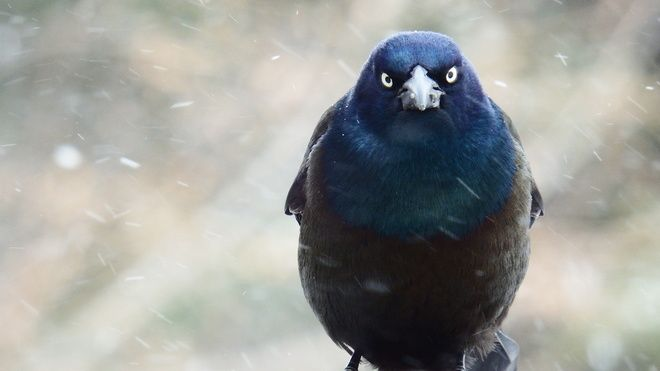 Five photos: Angry birds - The Weather Network