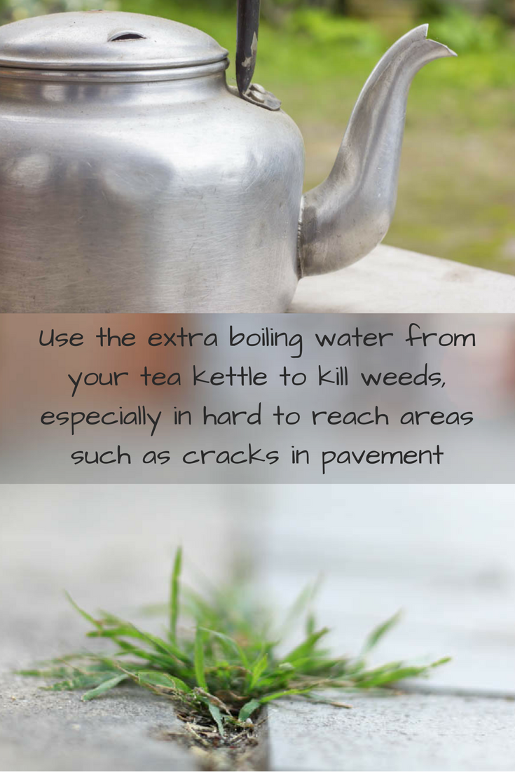 Hot water is an effective organic weed killer especially in hard