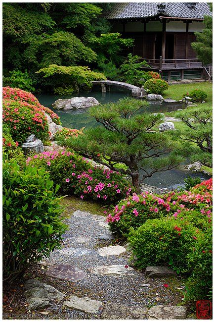Rhododendrons in bloom, Shoren-in temple gardens. Japanese Garden. Ogród japoński.