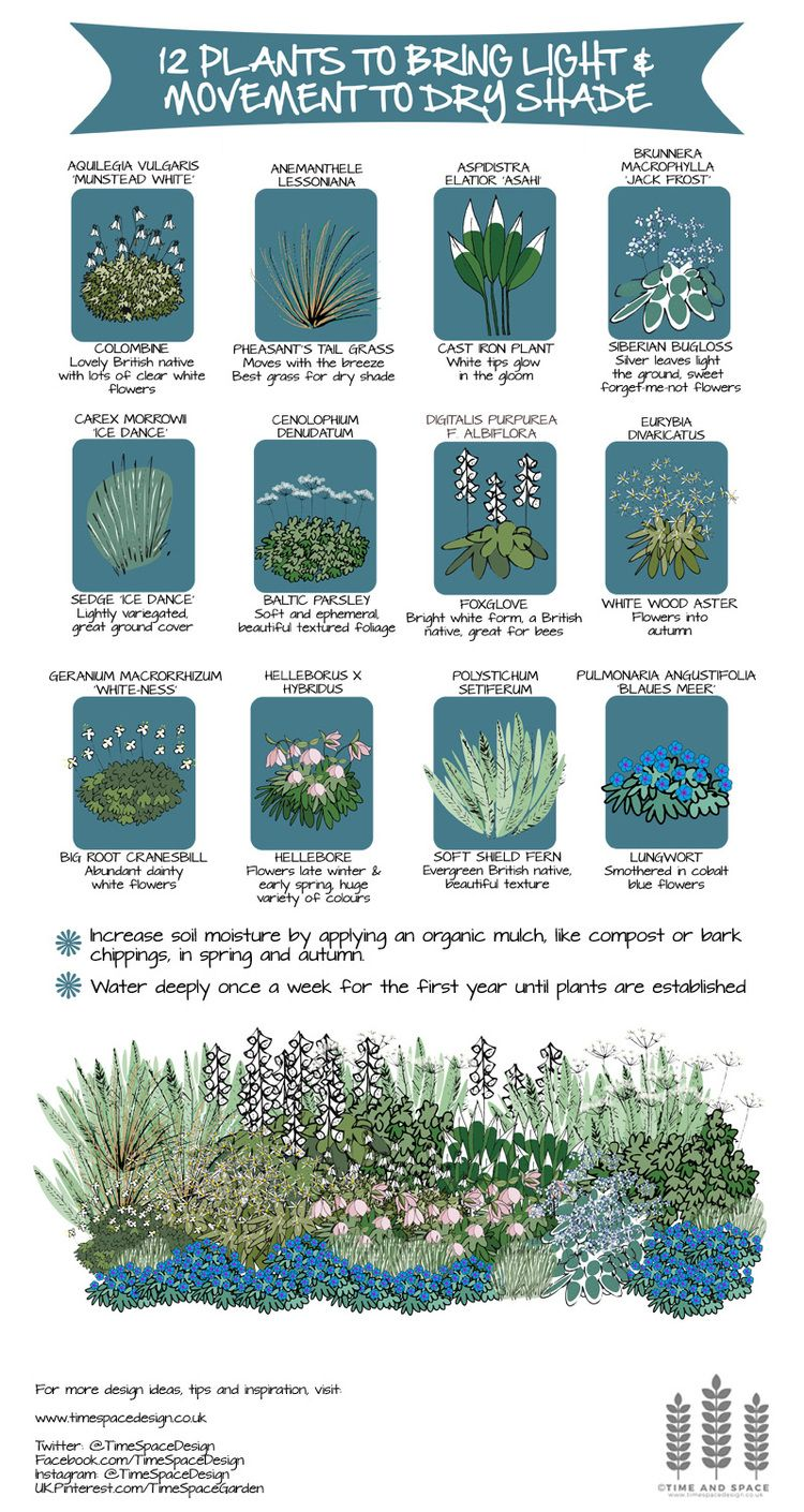 12 Plants To Bring Light And Movement To Dry Shade Time And Space