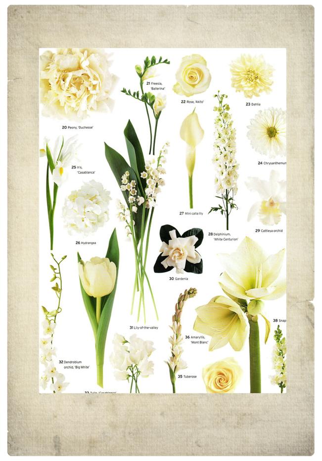 White flowers- vintage, garden, feminine flowers/ bouquets/ wedding ...