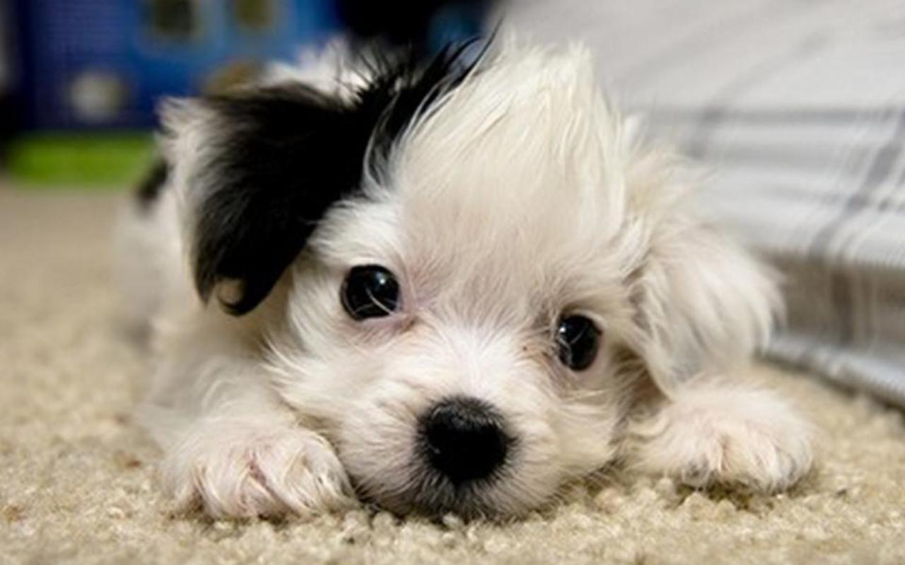 Cute Puppy love it too much