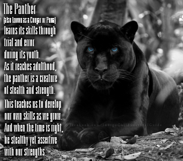 The panther reminds us to use our strengths and seize up