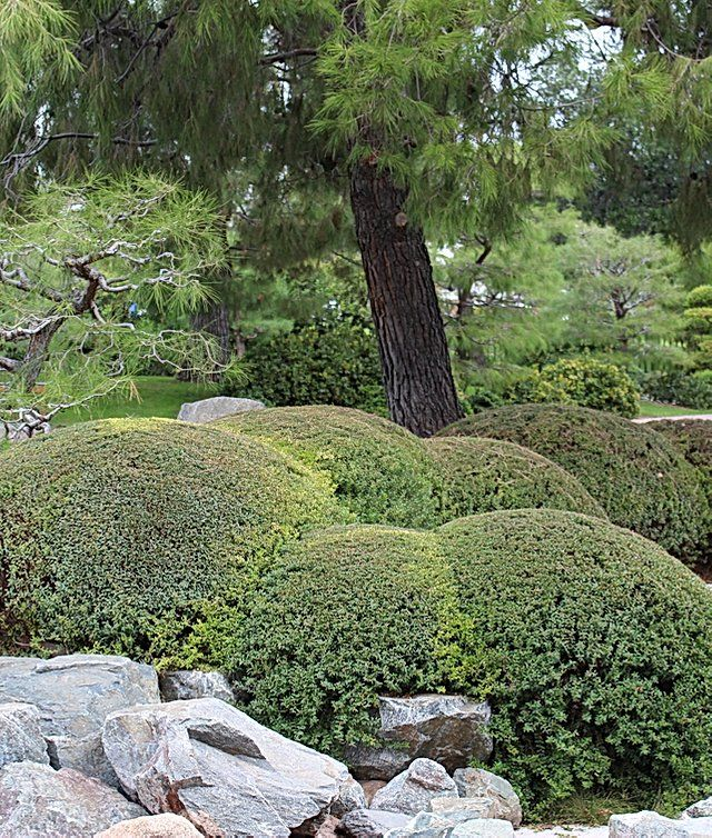 Japanese Friendship Garden I Phoenix I Culture and Arts